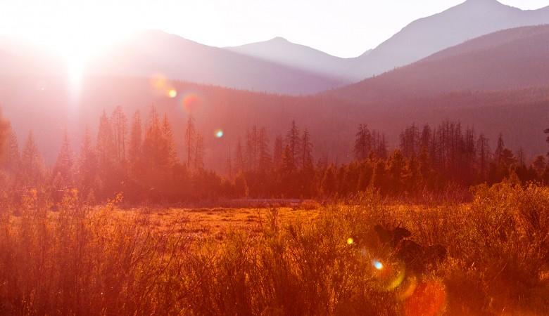 moose-landscape-rocky-mountain-national-park copy