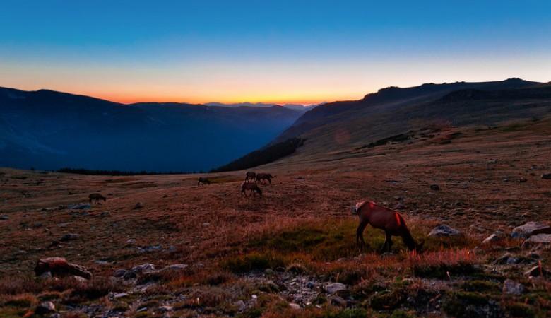 sunset-elk-rocky-mountain-national-park-L