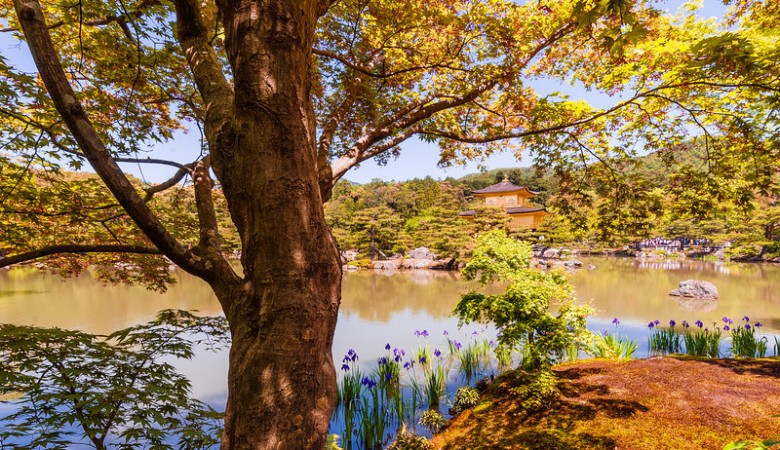 golden-pavilion-temple-kyoto-japan-L (1)