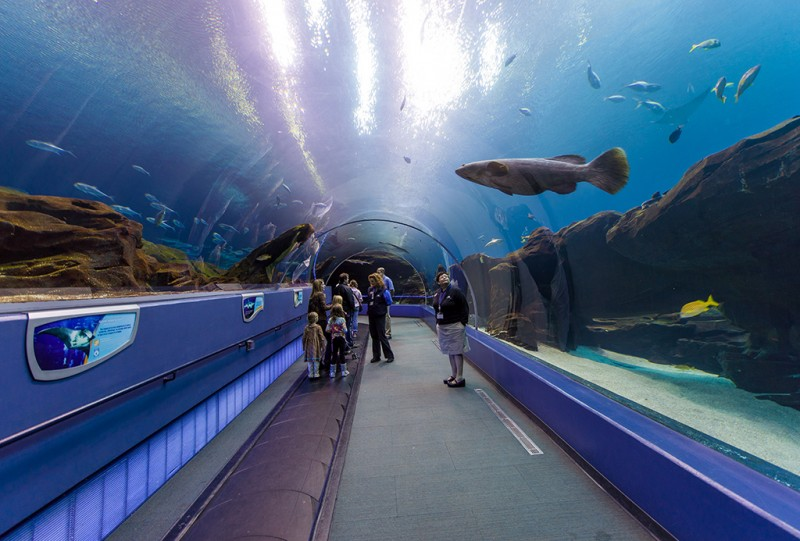 Review Is The Georgia Aquarium Worth It Travel Caffeine