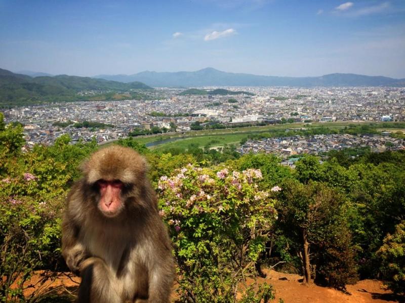 kyoto-monkey-park-japan