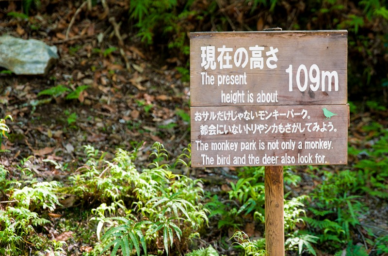 kyoto-monkey-park-068
