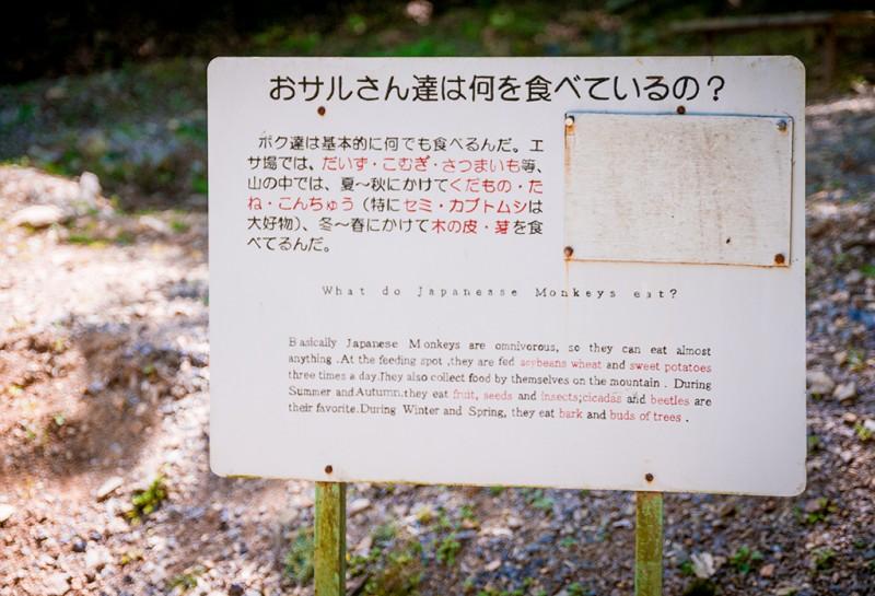 kyoto-monkey-park-070