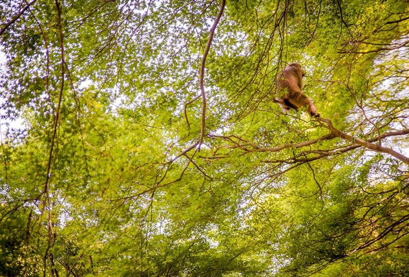 kyoto-monkey-park-071