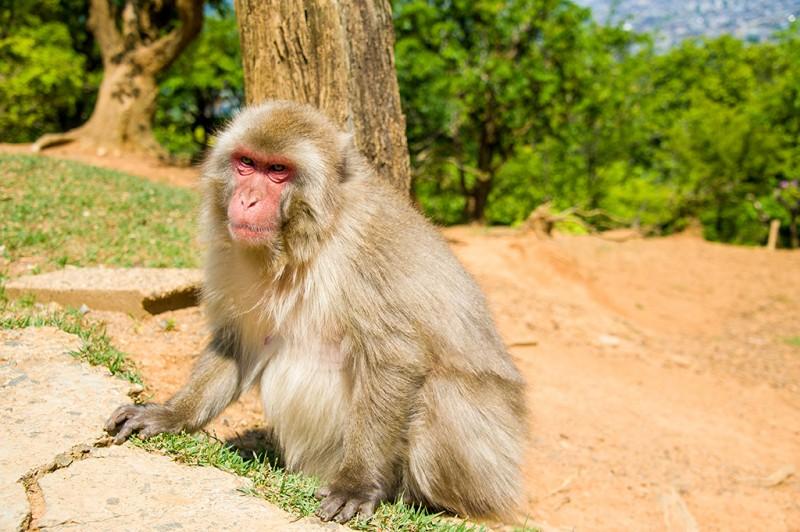 kyoto-monkey-park-073