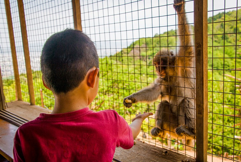 kyoto-monkey-park-074