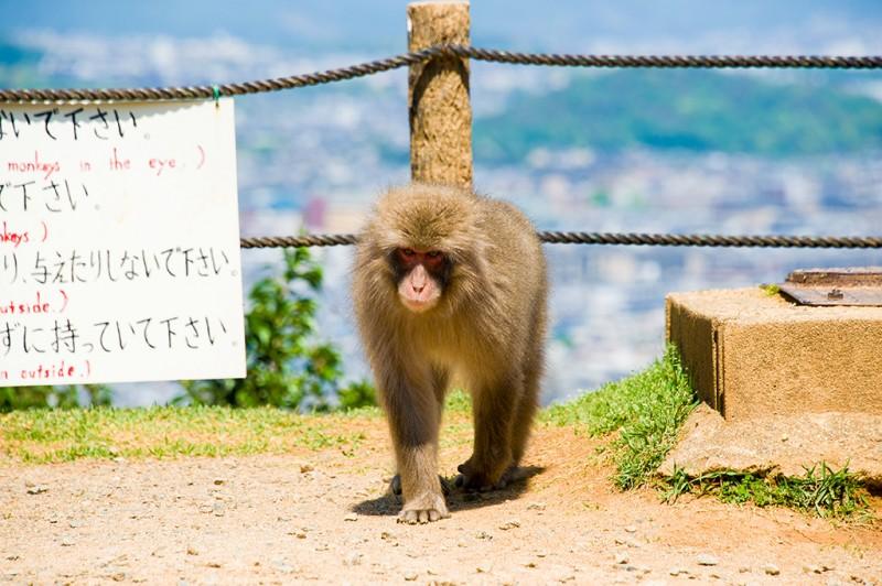 kyoto-monkey-park-076