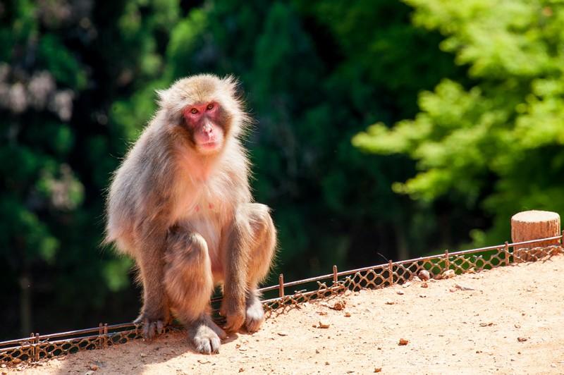 kyoto-monkey-park-079