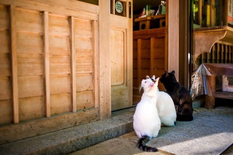 stray-cats-tokyo