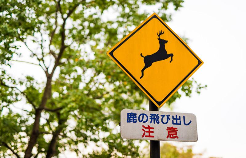 nara-japan-deer-276