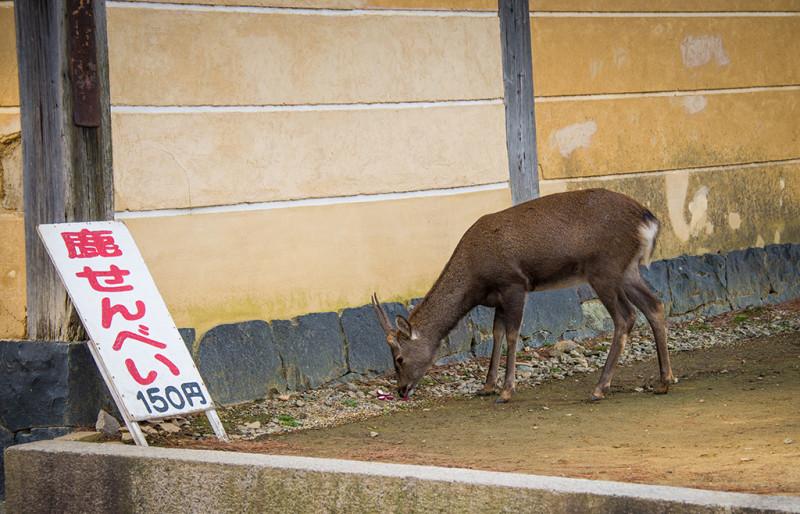 nara-japan-deer-277
