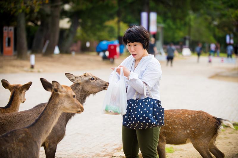 nara-japan-deer-301