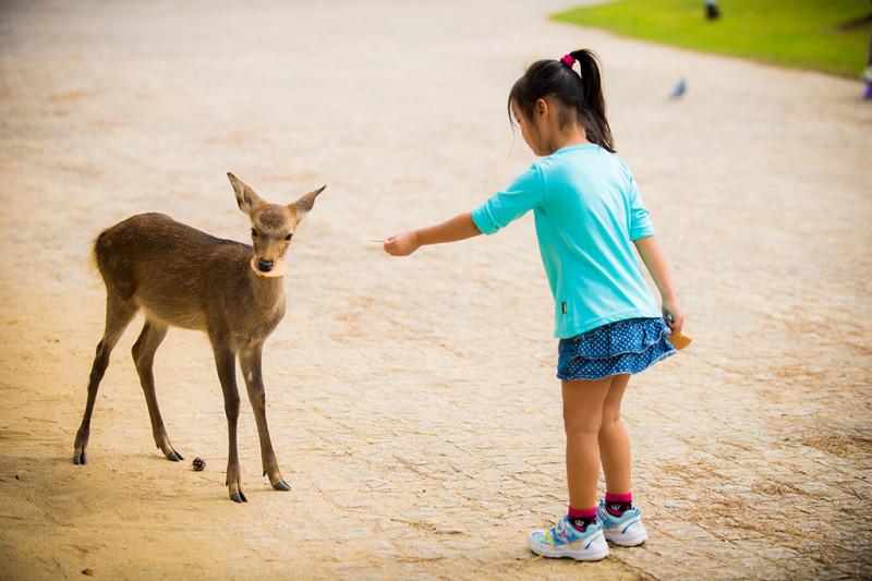 nara-japan-deer-302