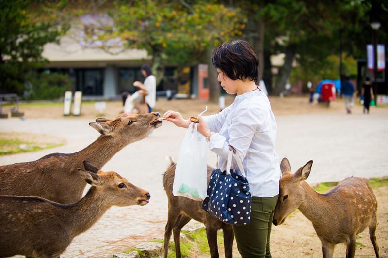 nara-japan-deer-308