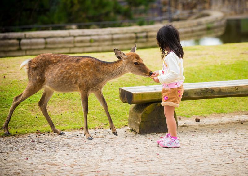 nara-japan-deer-310