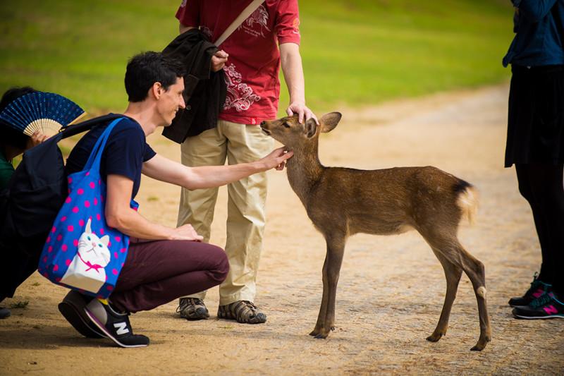 nara-japan-deer-312