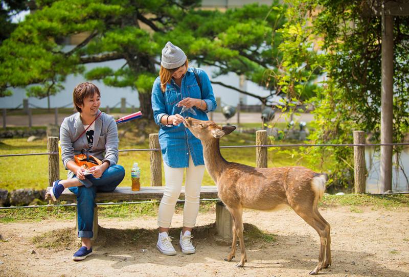 nara-japan-deer-321