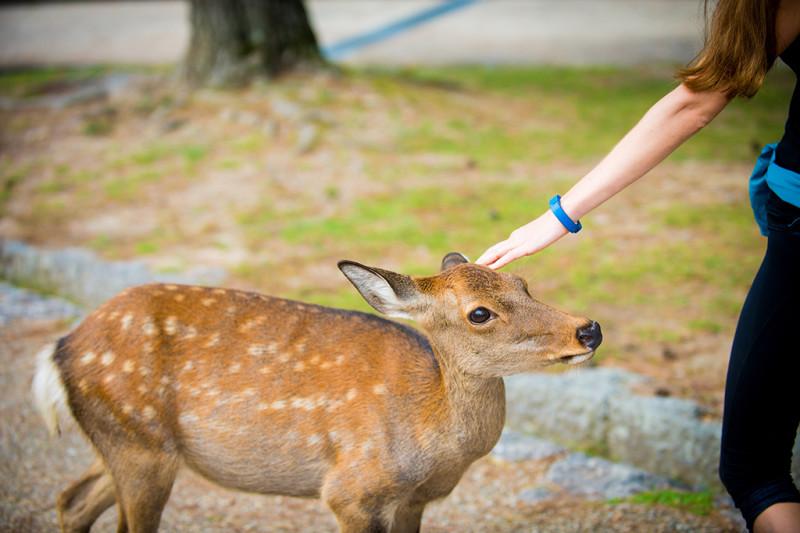 nara-japan-deer-324