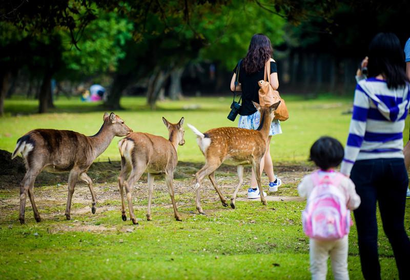 nara-japan-deer-325