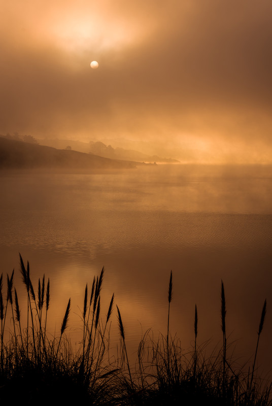 Santa-Cruz-Mountains-Crystal-Springs-sunrise-portrait