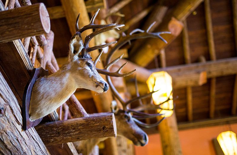 lake-mcdonald-lodge-taxidermy-2