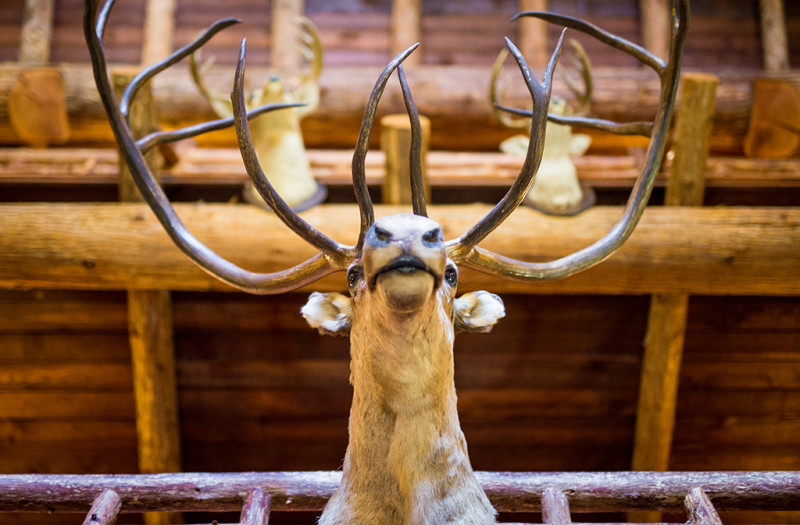 lake-mcdonald-lodge-taxidermy