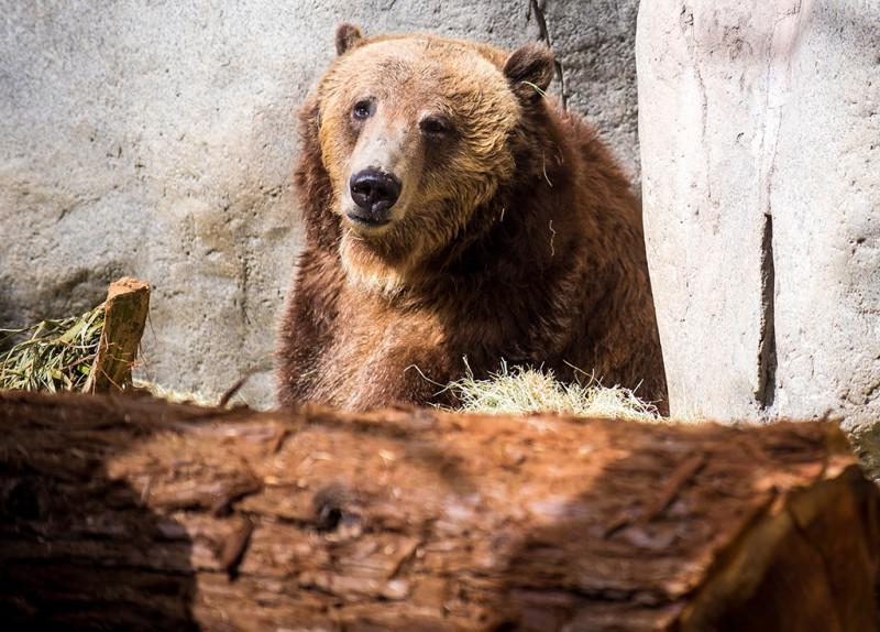 san-diego-zoo-california-615
