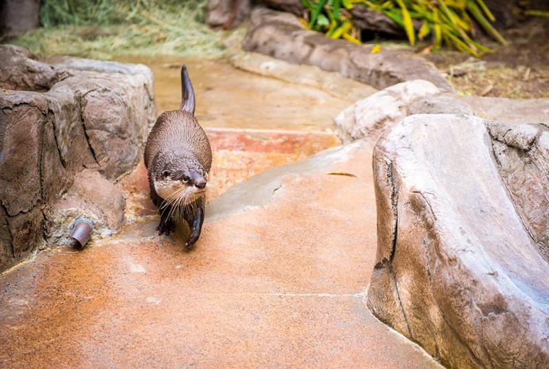 san-diego-zoo-california-616