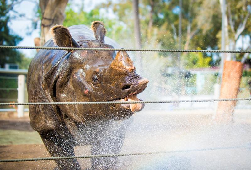 san-diego-zoo-california-619