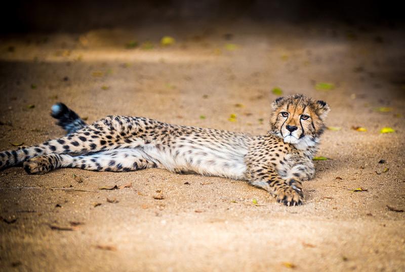 san-diego-zoo-california-622