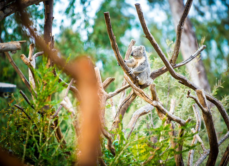 san-diego-zoo-california-623