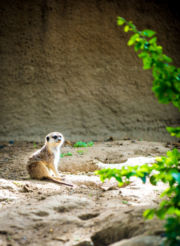 san-diego-zoo-california-627