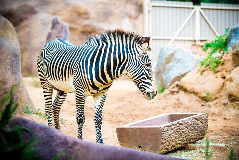 san-diego-zoo-california-634