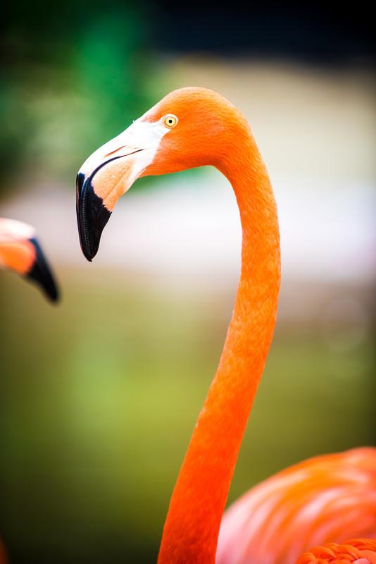 san-diego-zoo-california-636