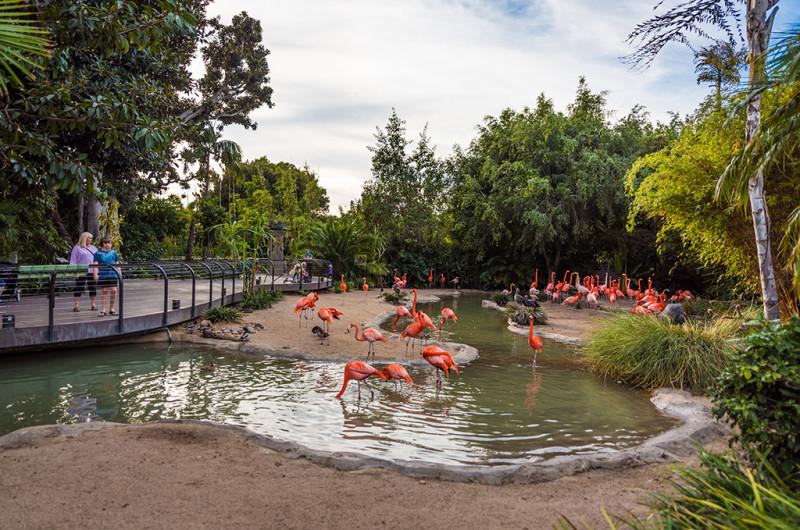 san-diego-zoo-california-642