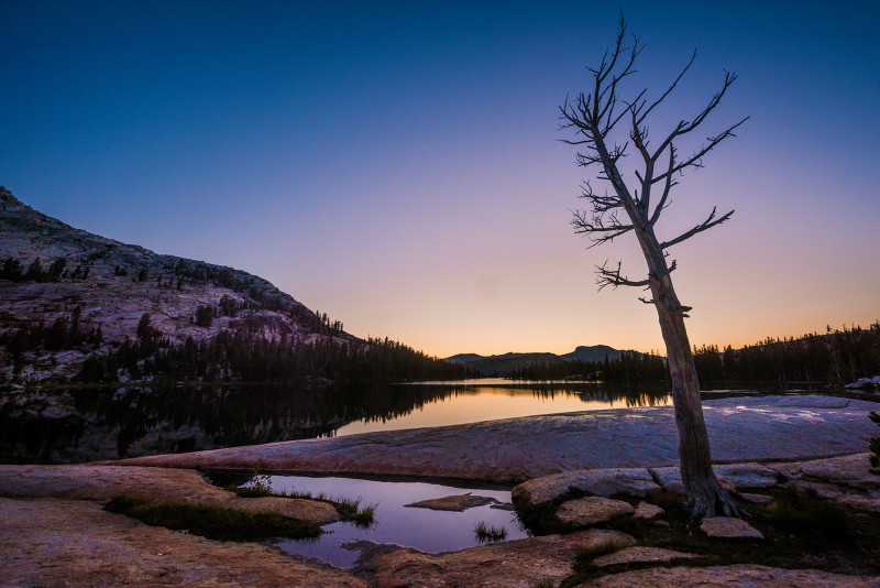 dusk-tree-lower-cathedral-lake-yosemite