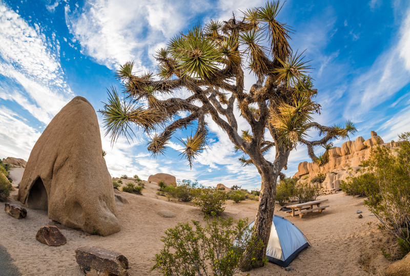 joshua-tree-national-park-bricker-376 copy