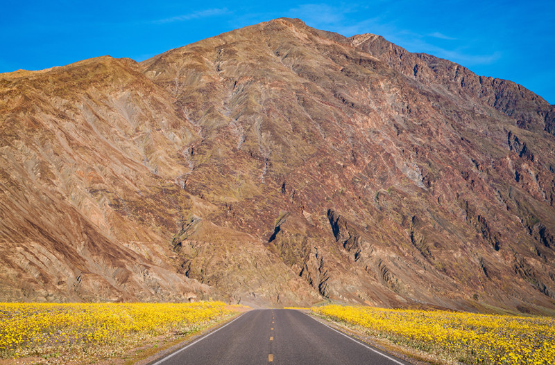 badwater-road-super-bloom-death-valley-national-park