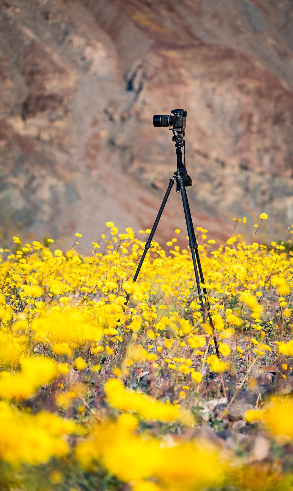 Super Bloom At Death Valley National Park Travel Caffeine