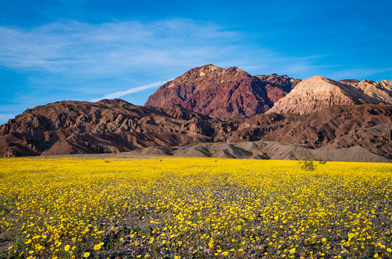 super-bloom-2016-death-valley-national-park-badwater-004