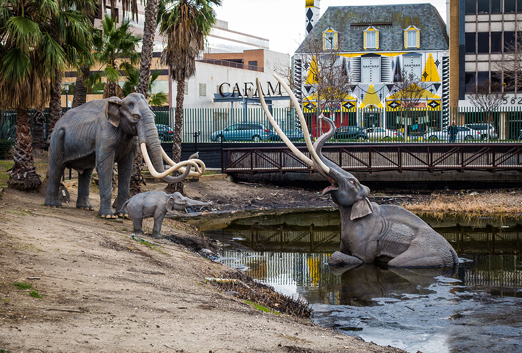 la brea tar pits Watch as this saber-toothed cat struts down wilshire blvd to its home at the la brea tar pits and museum and then check out the puppet (and her kitten) live at kid.
