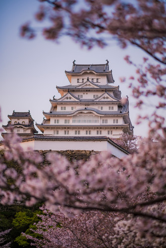 himeji-castle-hanami-blossom-night-lighting-japan-538
