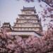 himeji-castle-hanami-blossom-night-lighting-japan-538