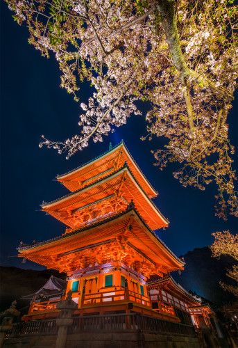 kiyomizudera-temple-kyoto-japan-sakura-cherry-blossom-night-lighting-pagoda-bricker