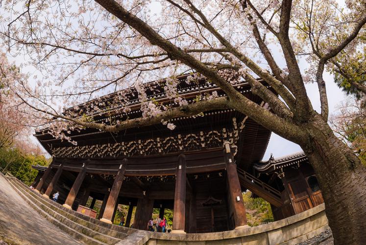 nanzenji-temple-cherry-blossom-sakura-season-kyoto-japan-531