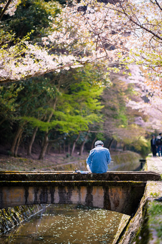 philosopher-path-artist-cherry-blossoms-kyoto-japan