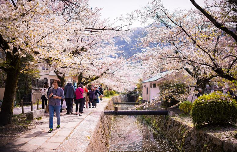 philosophers-path-cherry-blossom-sakura-season-kyoto-japan-527