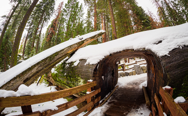 sequoia-national-park-kings-canyon-california-644