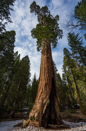 general-grant-tree-sequoia-kings-canyon-national-park-570