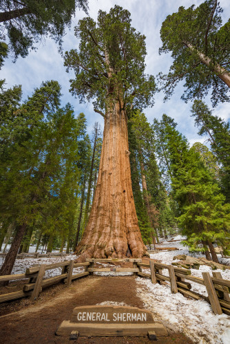 general-sherman-tree-sequoia-kings-canyon-national-park-573
